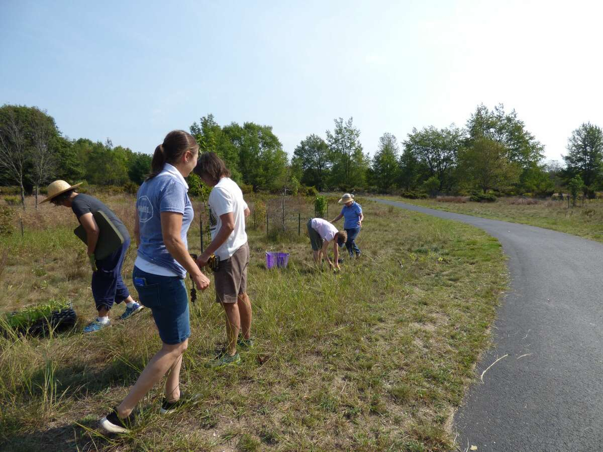 Volunteers from the Portage Lake Garden Club plant native perennials at North Point Park in Onekama on Sept. 11. These pollinator-friendly flowers are part of a long-term effort to restore the park as a native prairie habitat.