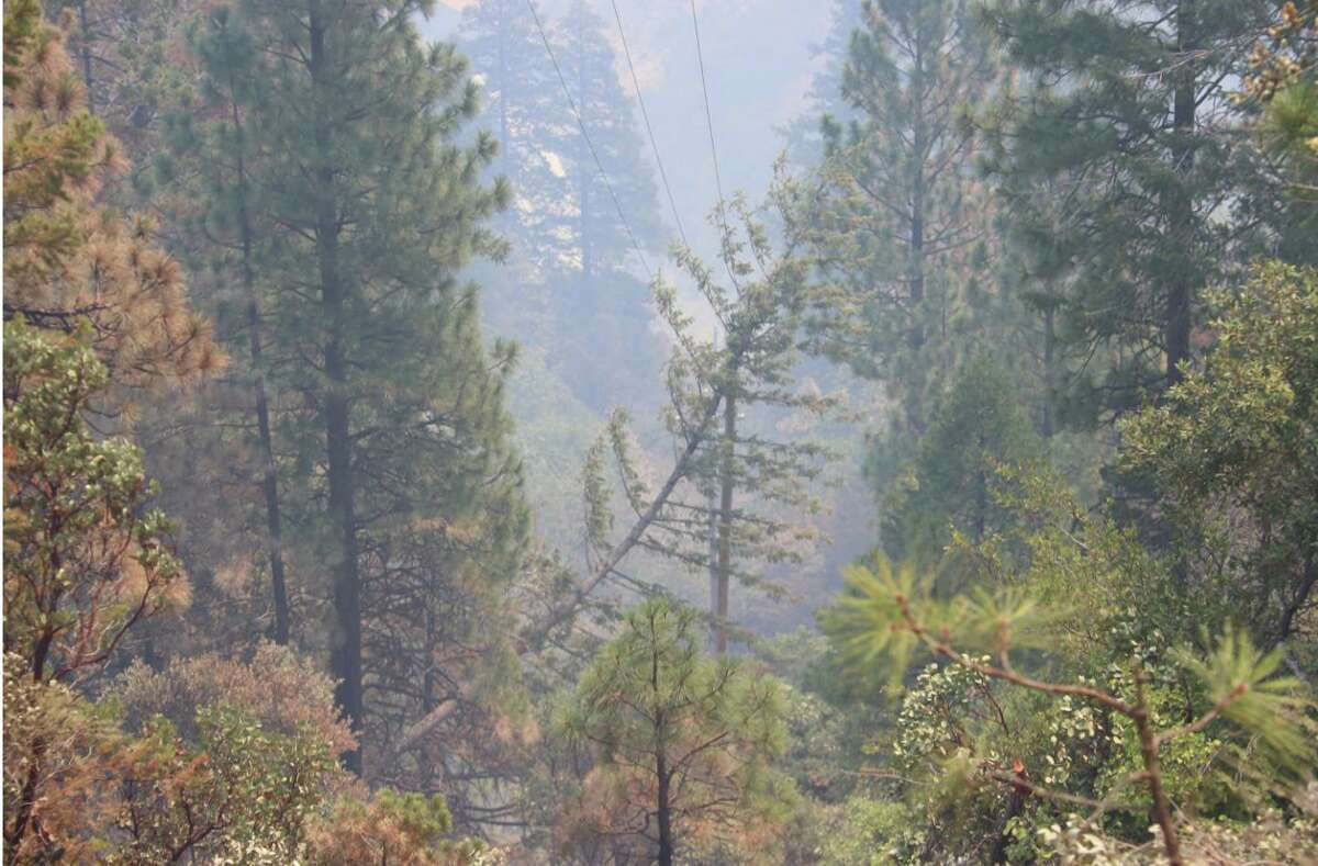 A fir tree leaning on a power line in the area where the Dixie Fire started in the Feather River Canyon on July 13.