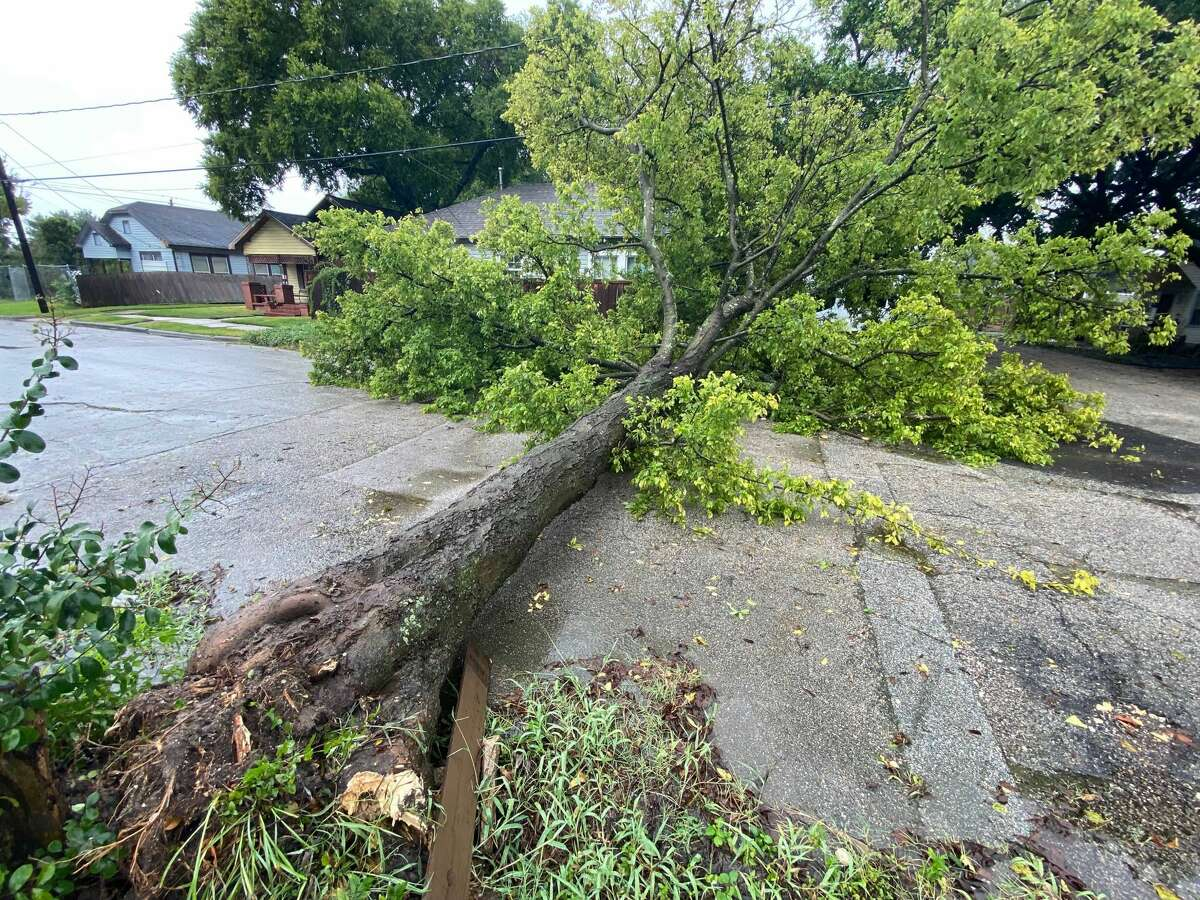 A tree blocks the roadway at Edgewood and Avenue H in east Houston after Hurricane Nicholas.