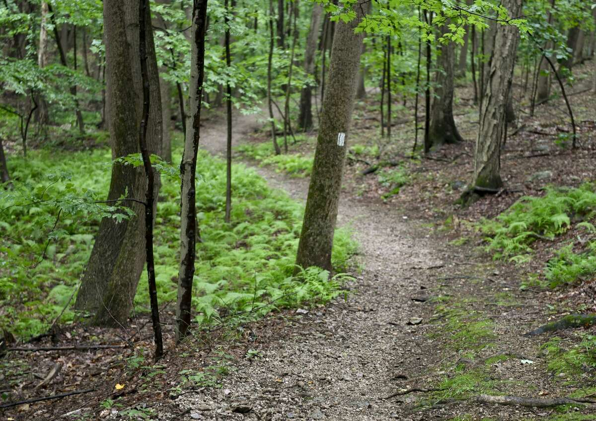 Lower Alsace Township, PA - June 22: A section of trail. In the Neversink Mounatin Preserve in Lower Alsace Township Tuesday afternoon June 22, 2021. (Photo by Ben Hasty/MediaNews Group/Reading Eagle via Getty Images)