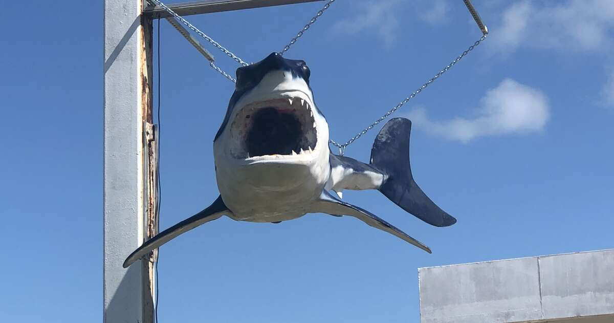 """Bruce, a 15-foot replica of a real shark caught in 1979, is the real culprit behind that """"sharknado"""" video from Tropical Storm Nicholas."""