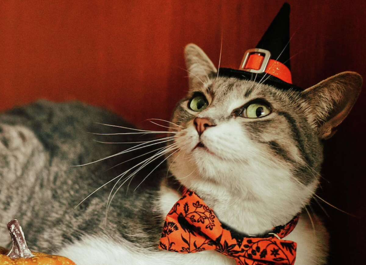 Dress your cat in a cute Halloween costume.