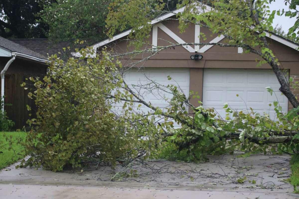 A fallen tree blocks a driveway along Blackhawk Boulevard Tuesday morning.