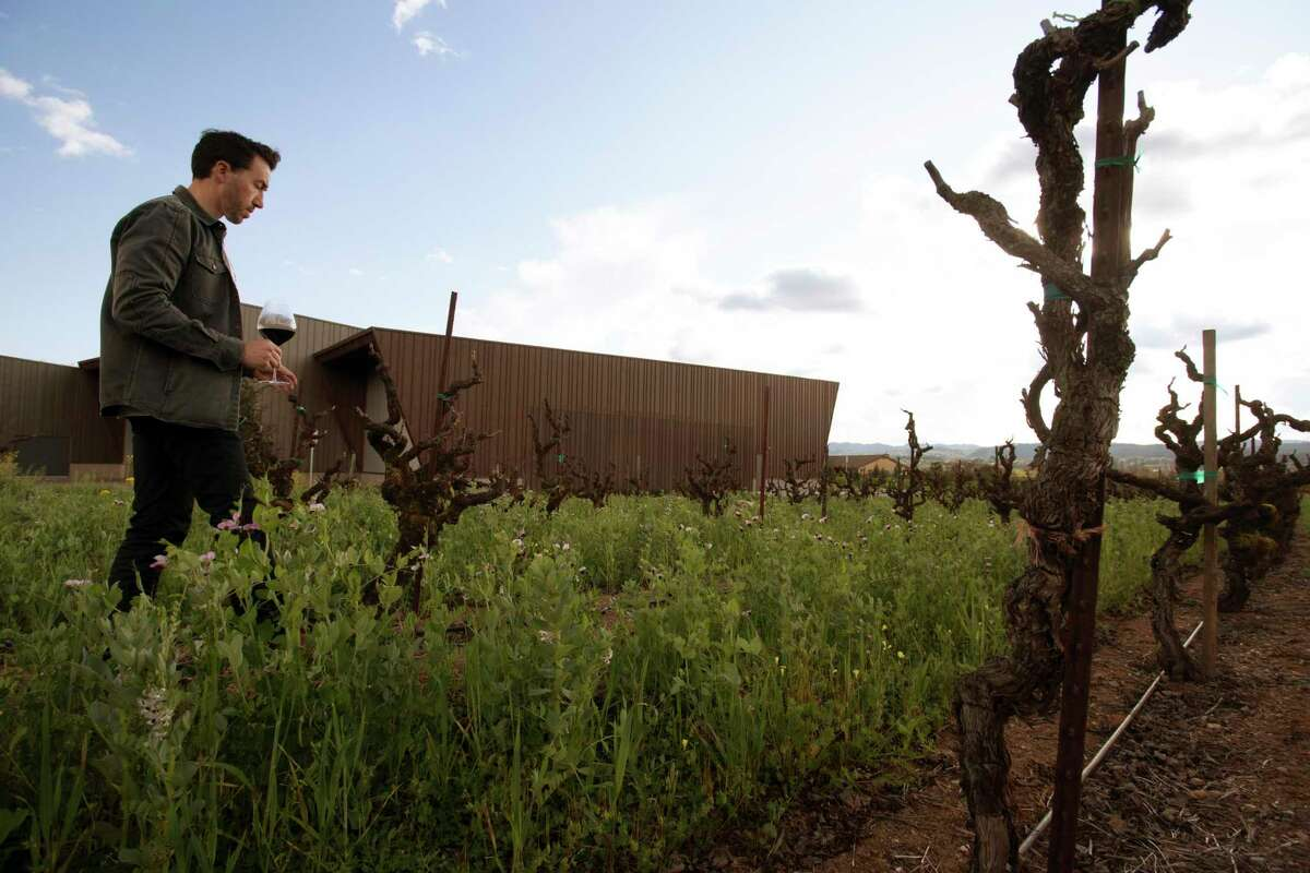 Winemaker Jesse Katz stands at his winery and vineyard property in Healdsburg. The Aperture Cellars owner just bought a second vineyard, in Geyserville.