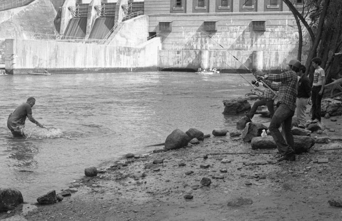 (From left) James Low is in the water and is helping Mark Dorman land a salmon yesterday near Tippy Dam. Foul hooking began last week as the fall salmon run in Manistee County continues and the fishing activity begins to move inland. The photo was published in the News Advocate on Sept. 16, 1981.