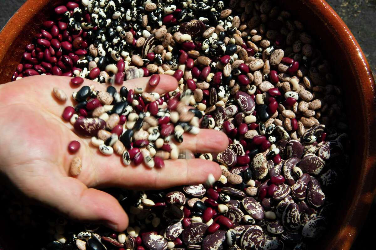 Rancho Gordo owner Steve Sando sifts through a variety of dried beans at the company's store in Napa. The company marked its 20th anniversary this year.