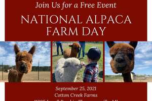Pictured is the flyer for National Alpaca Farm Day at Cotton Creek Farms.