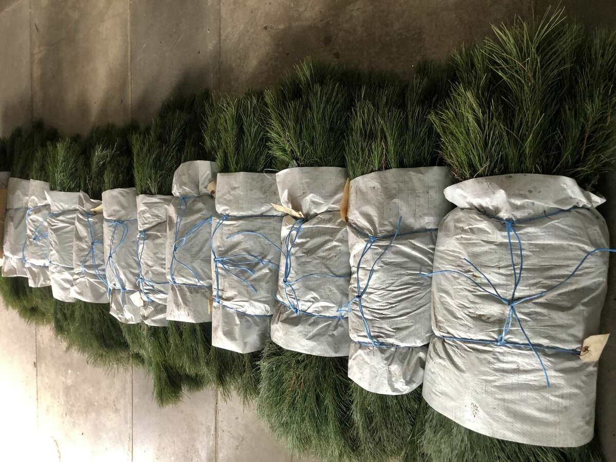 The Mecosta & Osceola-Lake Conservation Districts are currently taking orders for native fall trees and shrubs with an ordering deadline of Monday, Sept. 20, the organization plans to distribute plants Oct. 1. (Courtesy/ Mark Sweppenheiser)