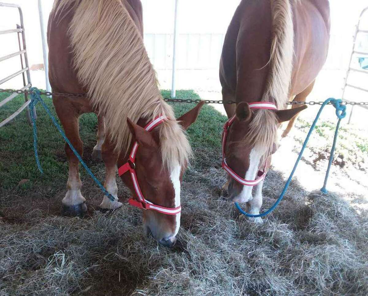 Horses are one of the farm animals that can always be found at the Foire du Pays d'Orange.