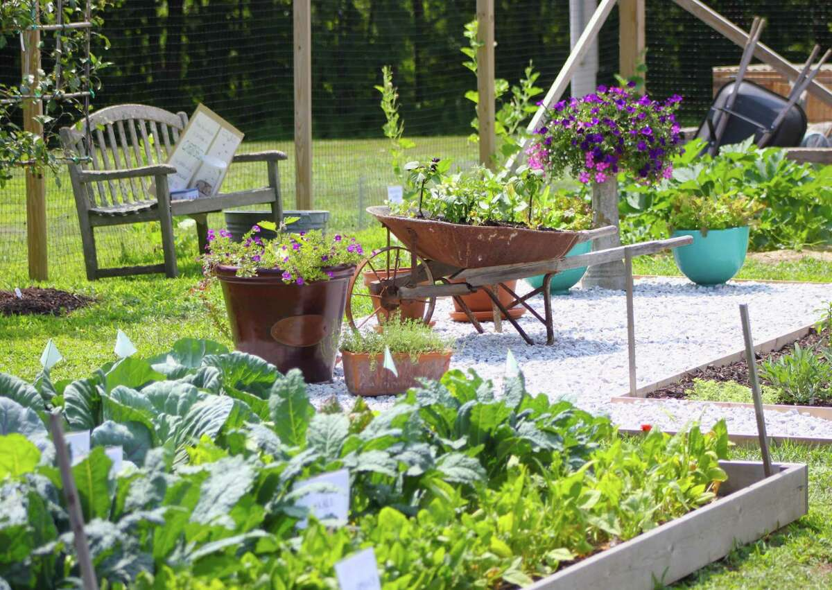 Interested residents are nivited to apply now for the 2022 UConn Extension Master Gardener Program. Classes will be held in Torrington, New Haven, Norwich, Tolland and Stamford. The deadline for applications is Oct. 18.