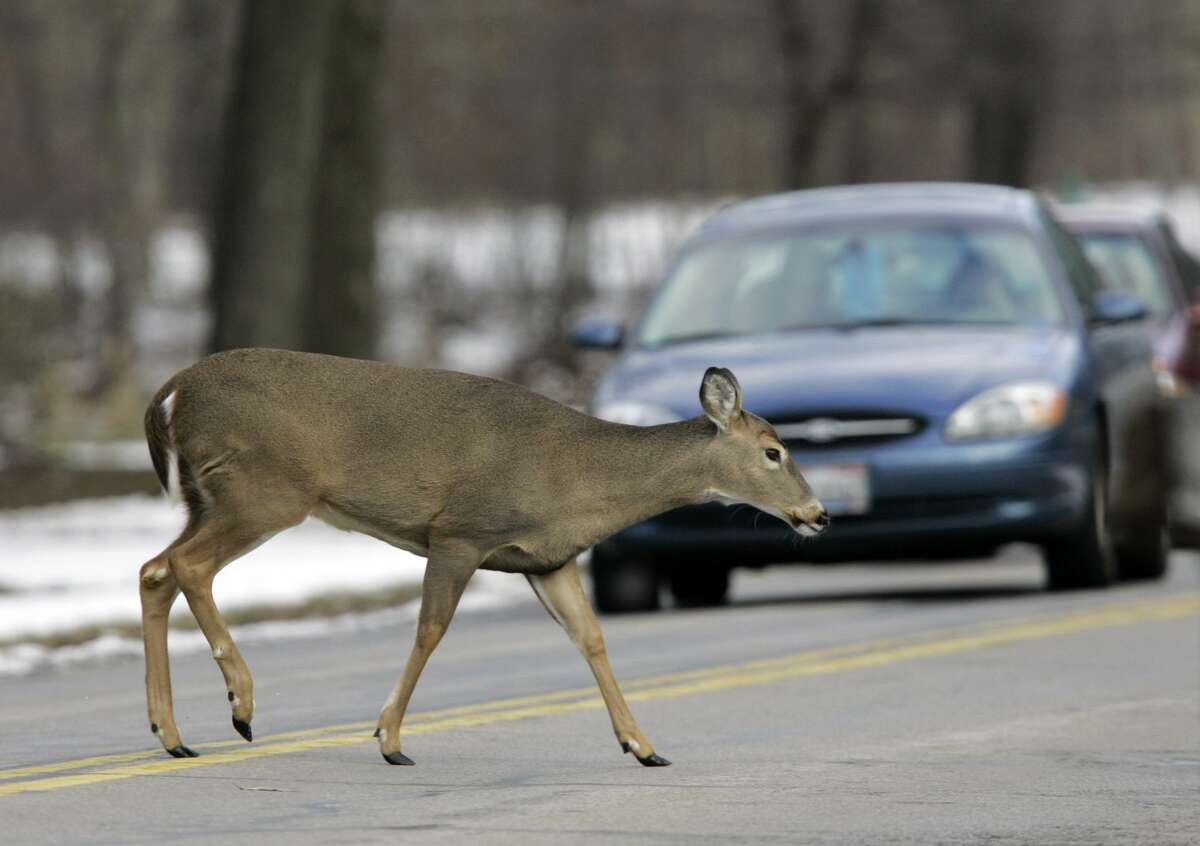 A white-tailed deer crosses in front of traffic on a parkway in Berea, Ohio, in 2008.Almost 50,000 deer vs. vehicle crashes are reported every year in the state of Michigan, according to the Michigan State Police.(AP Photo/Mark Duncan)