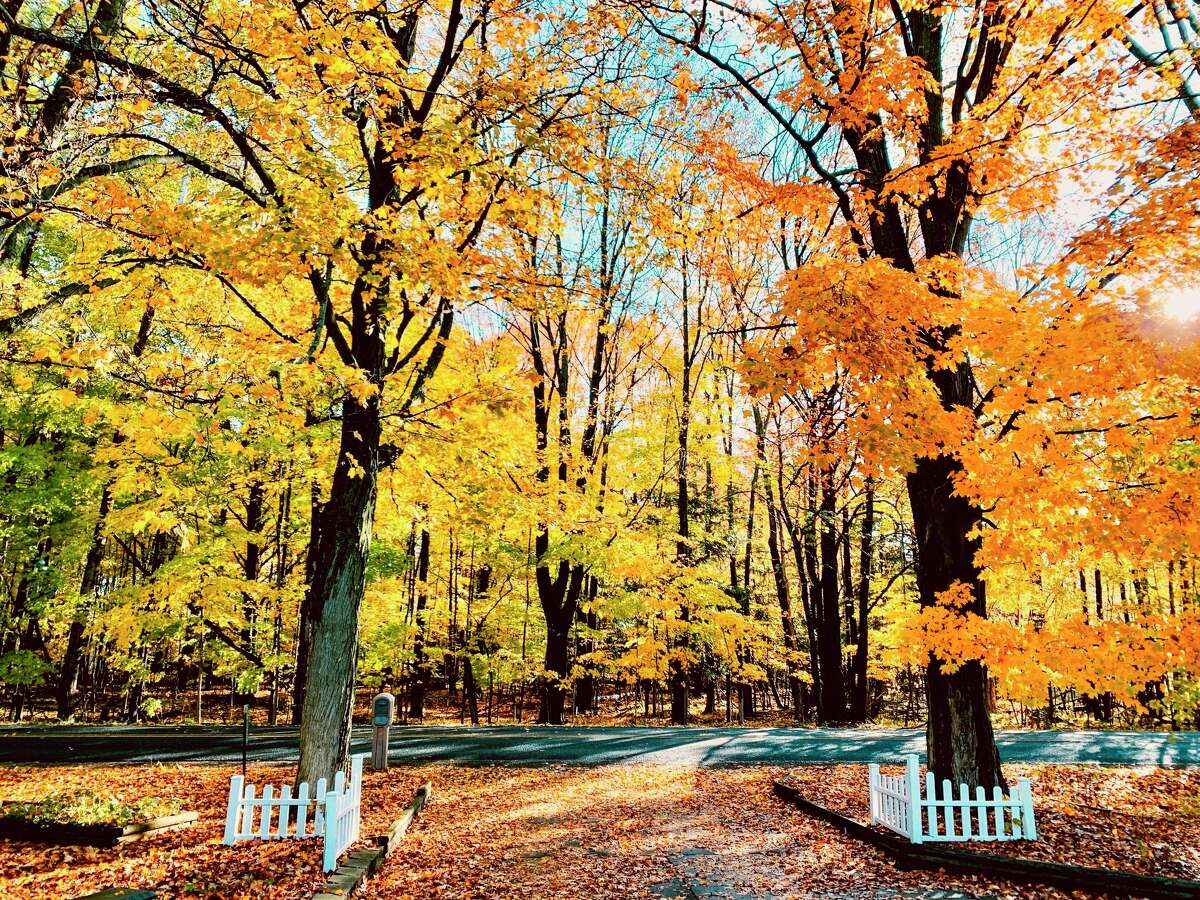Fall is just around the corner and now is the time to prepare your yard for the colder temperatures. (Star file photo)