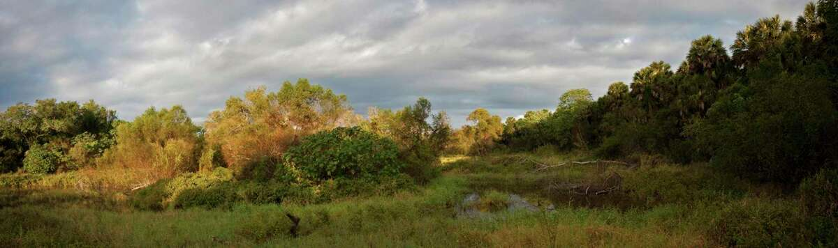 View from a bird blind looking over the main resaca of the Sabal Palm Sanctuary.