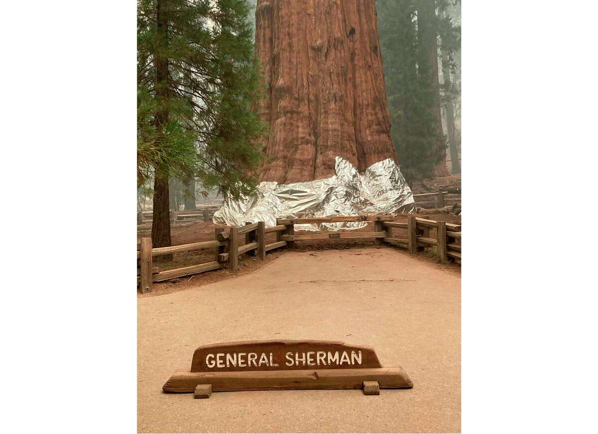 This photo provided by the Southern Area Blue Incident Management Team on Thursday, Sept. 17, 2021, shows the giant sequoia known as the General Sherman Tree with its base wrapped in a fire-resistant blanket to protect it from the intense heat of approaching wildfires at Sequoia National Forest in California. (Southern Area Blue Incident Management Team via AP)