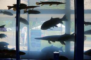 A 3,000-gallon mobile aquarium will be featured at the 32nd annual Two Rivers Family Fishing Fair 10 a.m. to 5 p.m. Saturday, Oct. 2 at Pere Marquette State Park near Grafton on Illinois 100.   IDNR photo