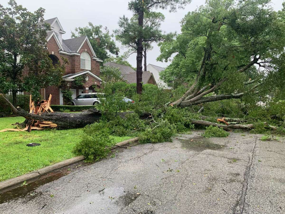 Bellaire Public Works department prepares to clear a downed tree in Bellaire due to Hurricane Nicholas