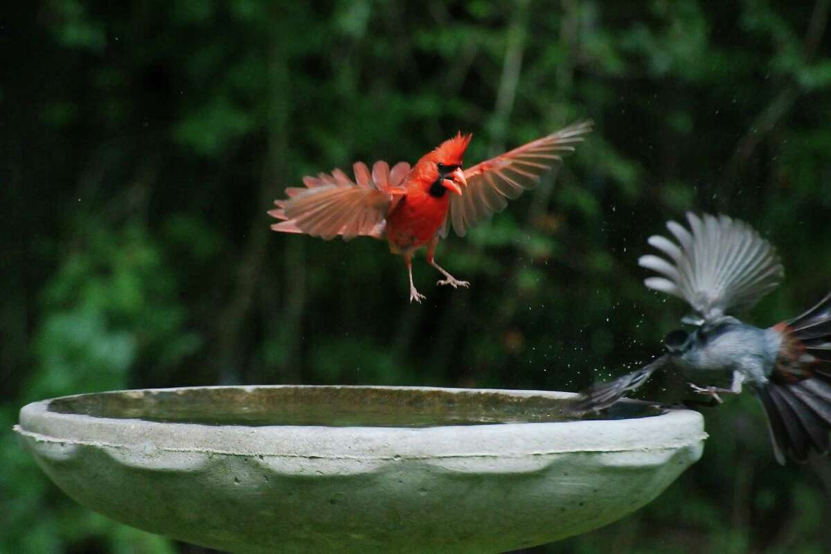 For birds (and squirrels), a birdbath will provide clear drinking water, but birds will also bathe and splash around in the birdbath - and that's free entertainment!
