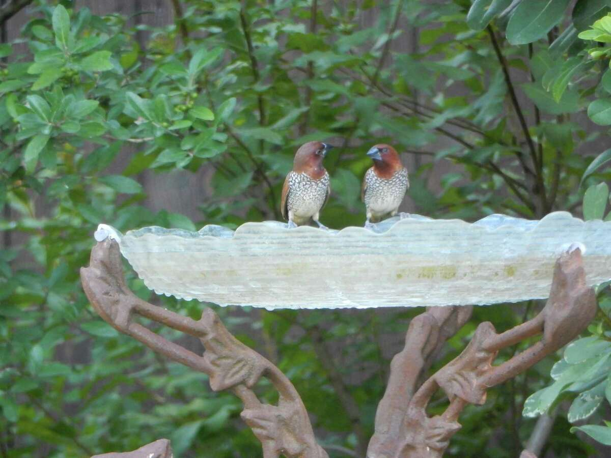 Birdbaths can be made from a variety of materials, including glass.