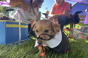 Scenes from the Bark for Life event held on Saturday, Sept. 18 at the Central Park Bandshell.