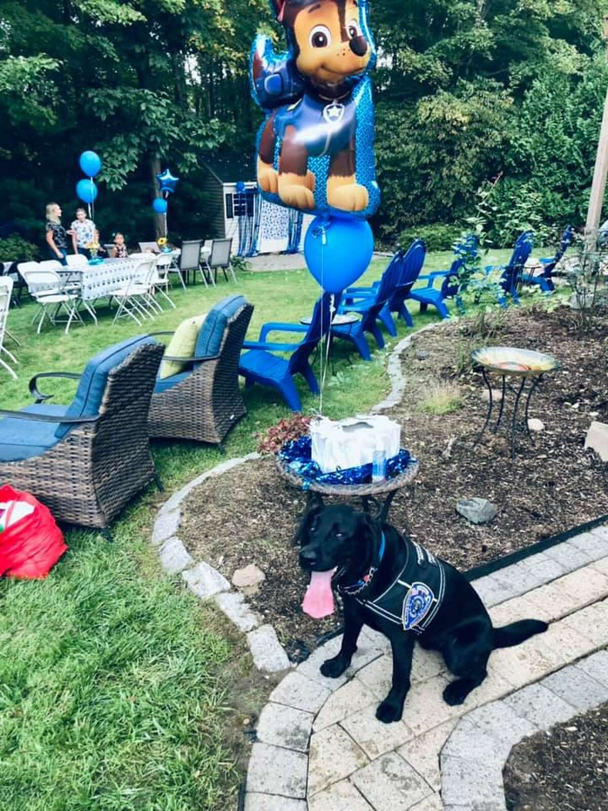 K-9 Bear was the star of the show at a local family's backyard fundraiser Saturday, Sept. 19.