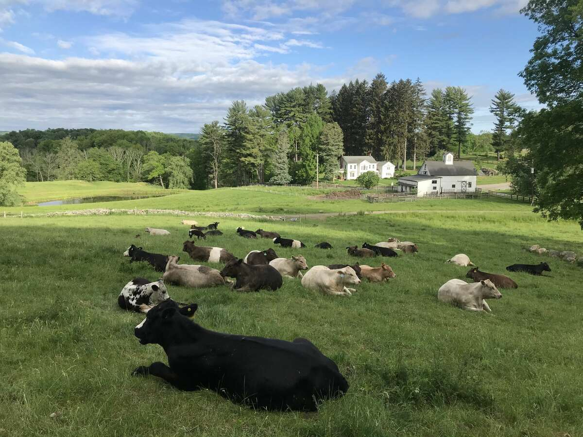 Harlem Valley Homestead would like to add 48 guest accommodations to its farm in the Dutchess County hamlet of Wingdale. A public hearing on Monday night will help the Town of Dover's planning board determine if the project warrants further environmental review.