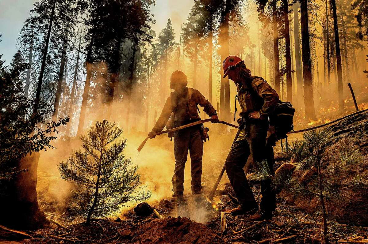 Firefighter Austin Cia sprays water against destruction by the Windy Fire burning in the Trail of 100 Giants grove in Sequoia National Forest.