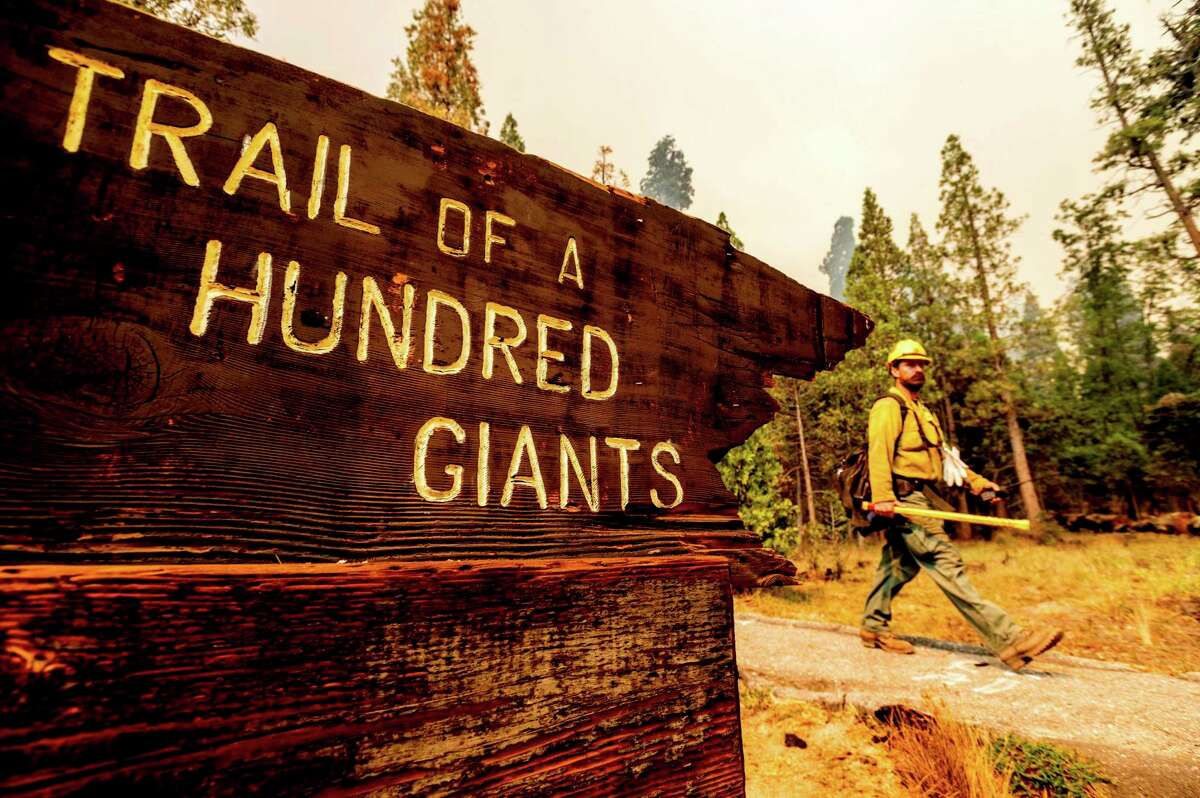 A firefighter battles the Windy Fire burning in the Trail of 100 Giants grove of Sequoia National Forest.