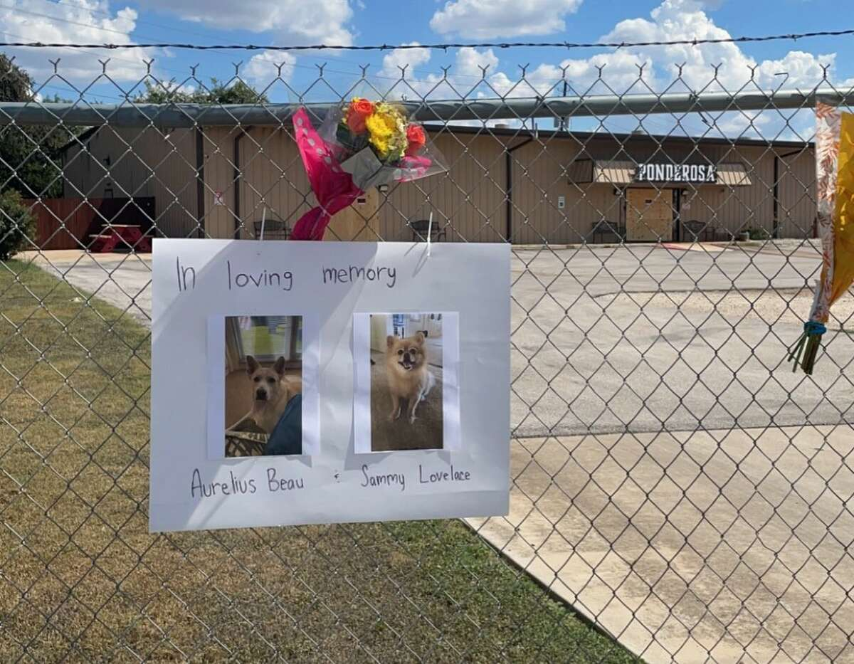 A fire at a pet resort on Saturday in Georgetown killed all 75 dogs it was housing, according to John Sullivan, the city's fire department chief.
