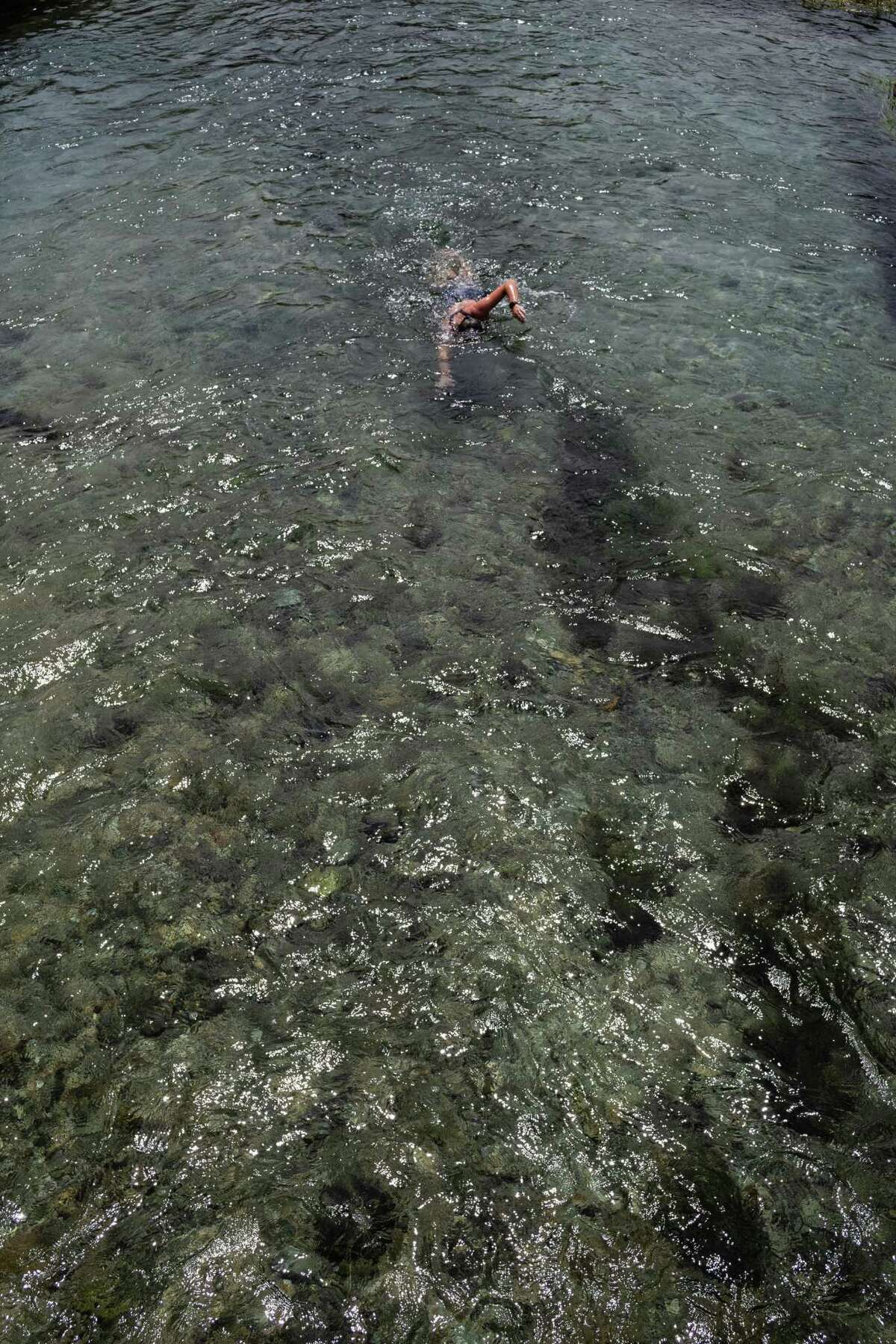 A swimmer heads upstream Wednesday in the San Marcos River.