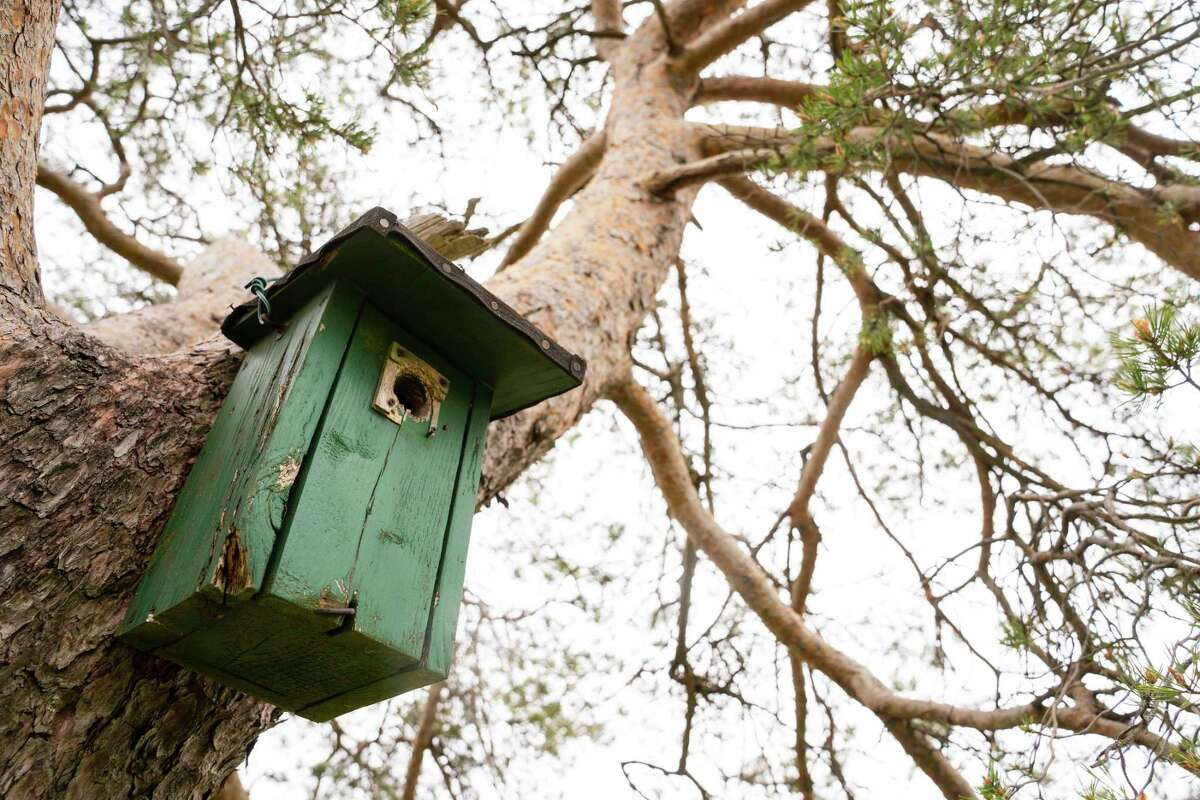 A birdhouse hangs from an old pine tree.To deep clean a nest box, bird enthusiasts should use a simple bleach solution or hot water.(Getty Images)