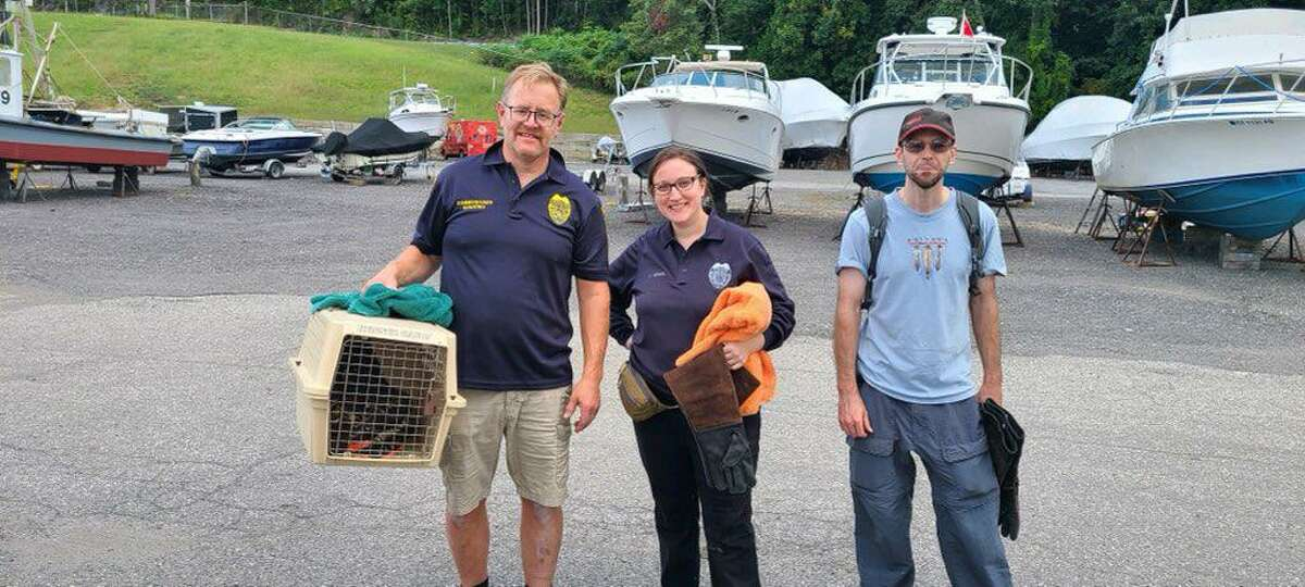 A person saved an osprey - tangled in a fishing line and hanging from a tree along the Housatonic River - on Sunday, Sept. 19, 2021.
