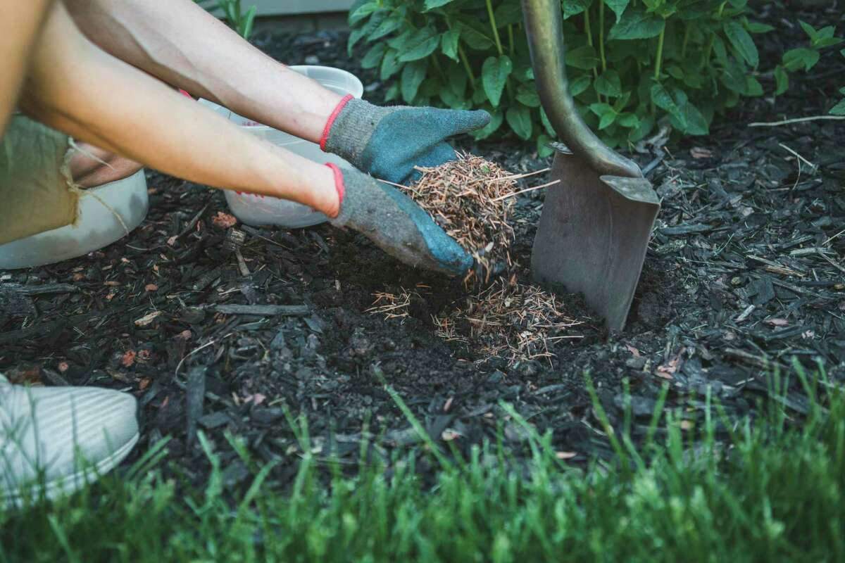 Learn tips totidy upthegarden before winter, including information onmulching and general maintenance, duringthe 6:30 p.m.virtual meeting of the Master Gardener Association of Northwest Michigan on Oct. 5. (Courtesy photo/Getty Images)