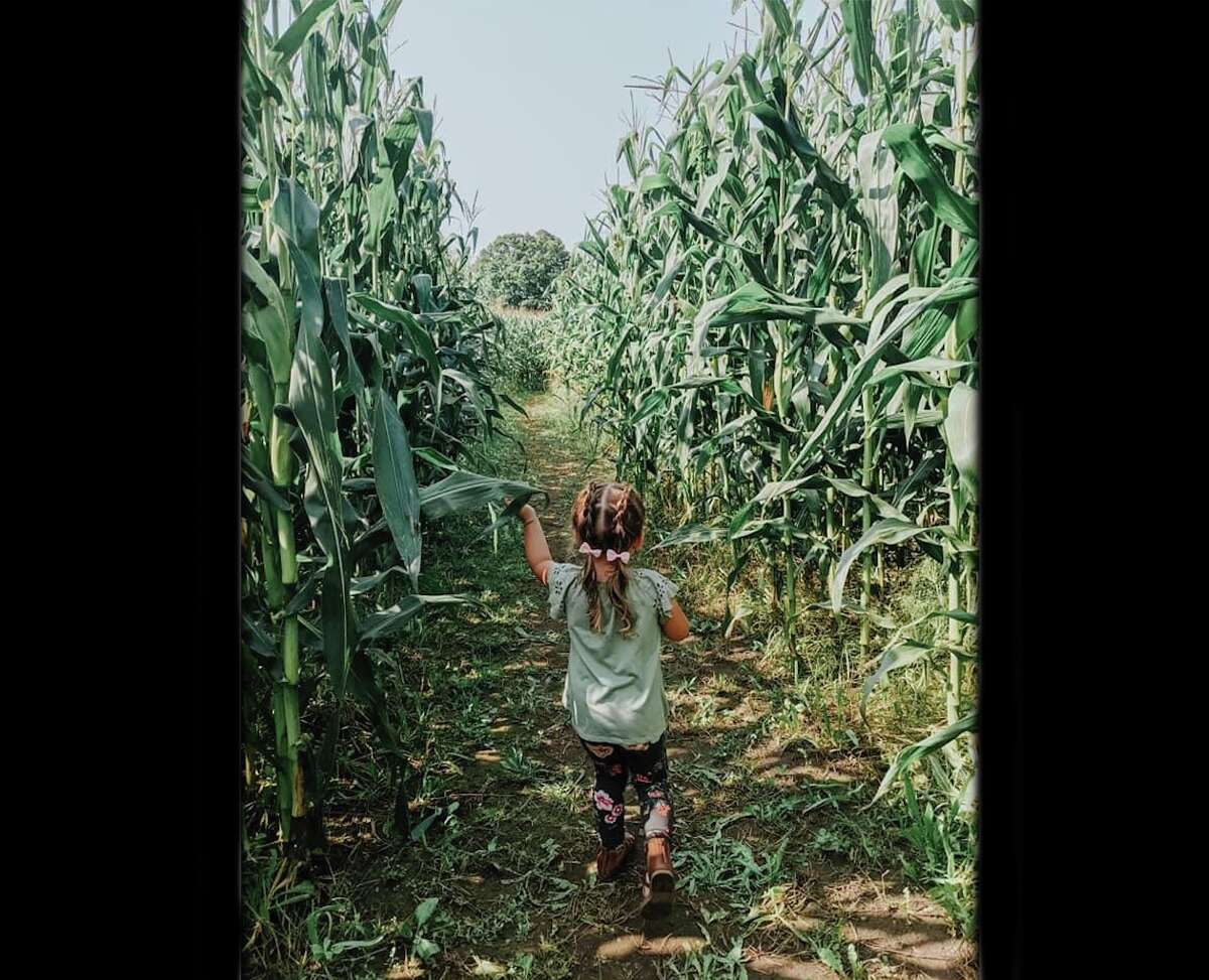 Manager Kendra Kissane said its has typically taken people anywhere from 15-30 minutes to make their way through the corn maze.