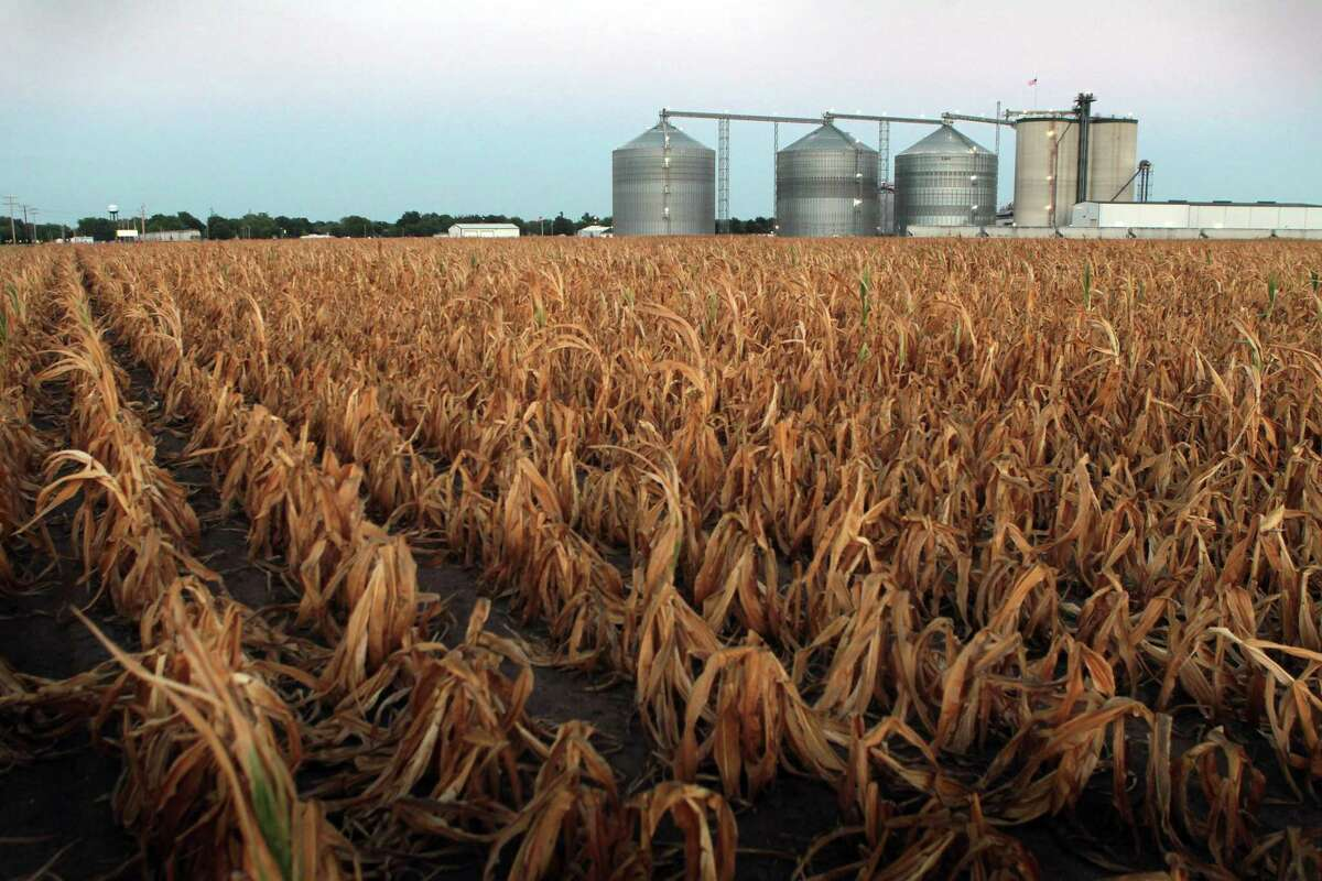 PALESTINE, IL - JULY 25: A field of dead corn sits next to the Lincolnland Agri-Energy ethanol plant July 25, 2012 in Palestine, Illinois. This summer's extended drought, which has scorched corn and soybean crops across the Midwest, is expected to impact the price of gasoline which, in most states, contains at least 10 percent ethanol. The price of ethanol on the Chicago Board of Trade has risen nearly 25% this year. (Photo by Scott Olson/Getty Images)