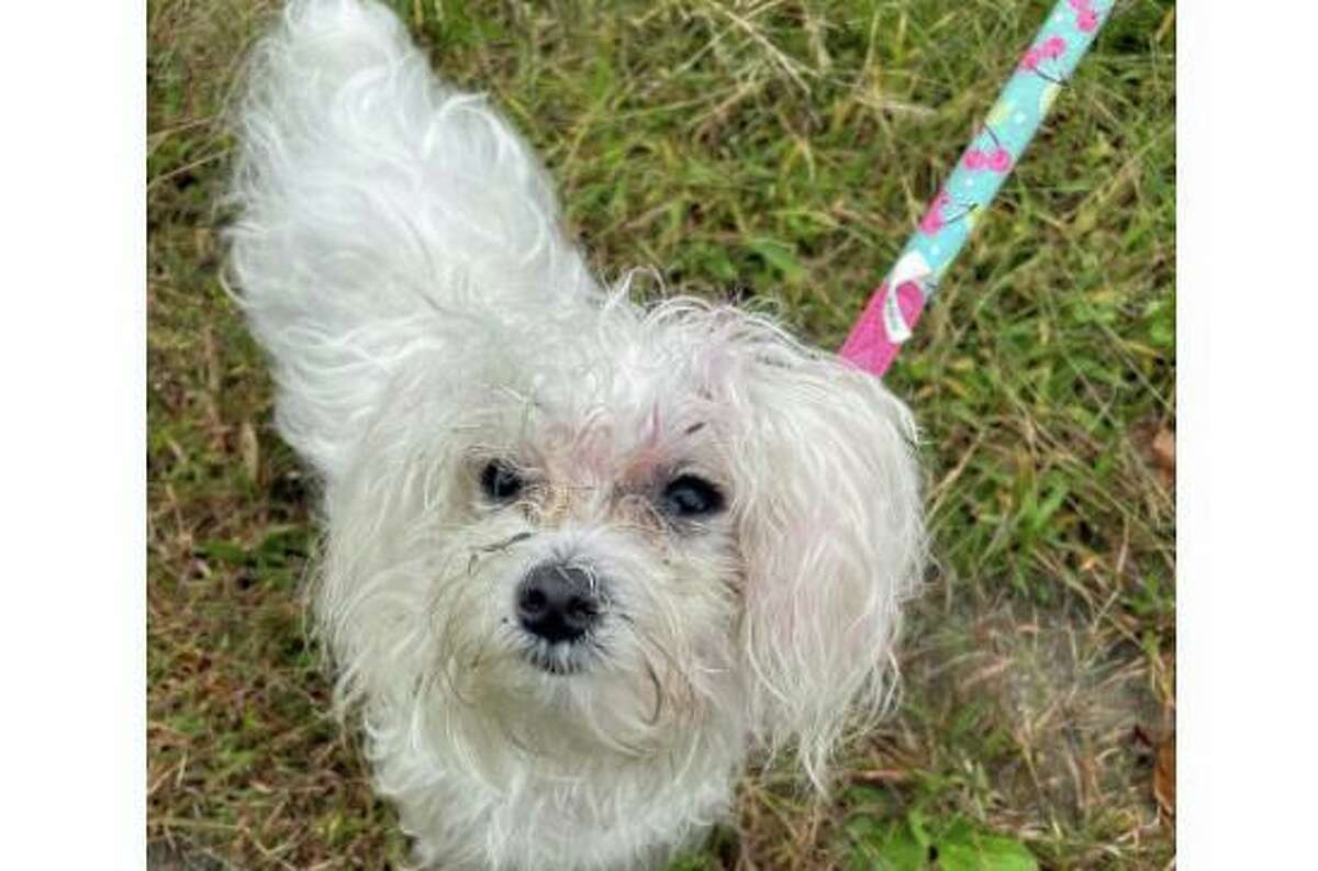 Cindy, who was stolen from a service area off I-95 in Fairfield, Conn., in February, was found and recovered by state police detectives in Waterbury on Sept. 22, 2021.