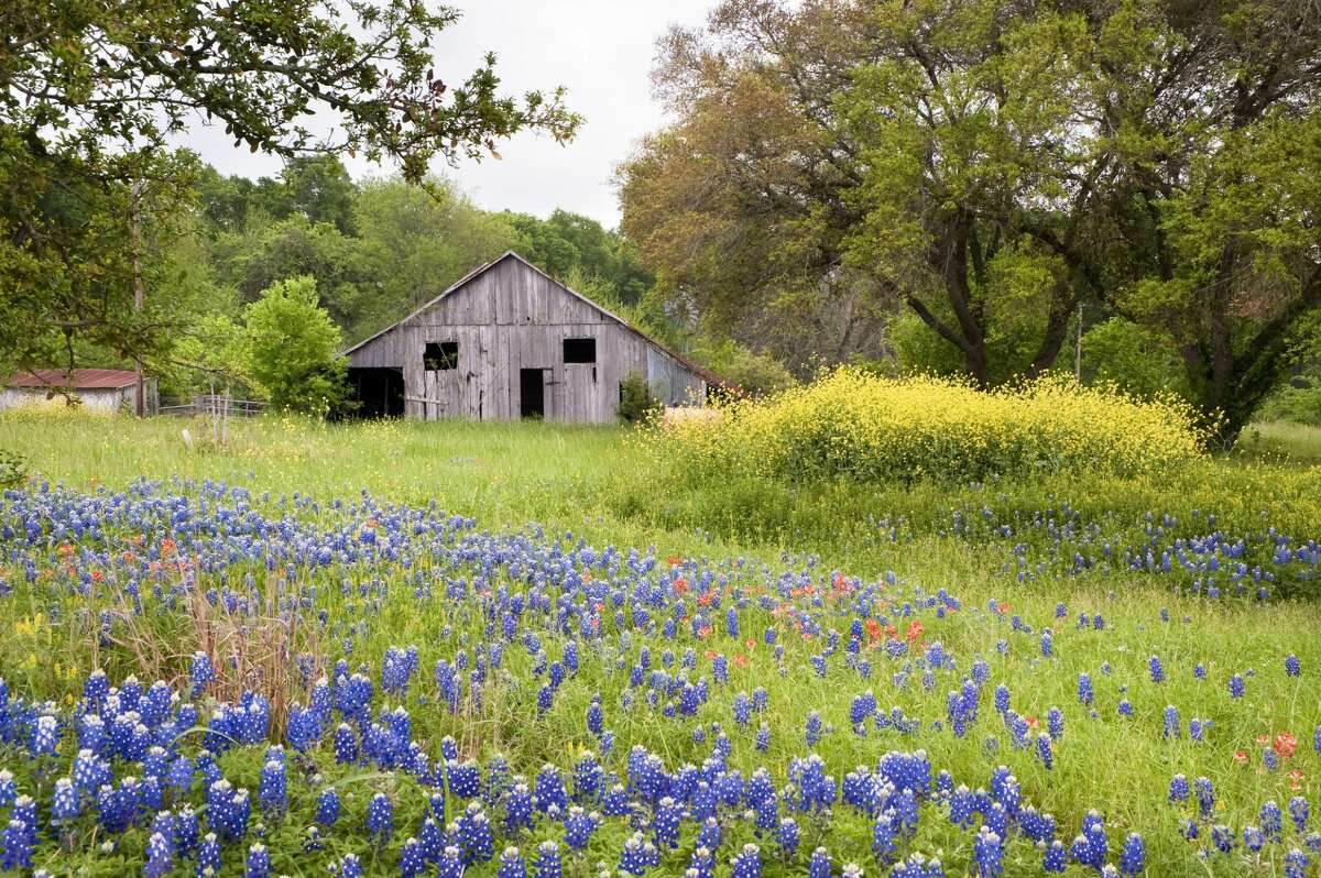 If you love this iconic landscape of Texas bluebonnets, keep scrolling. We're just getting started!