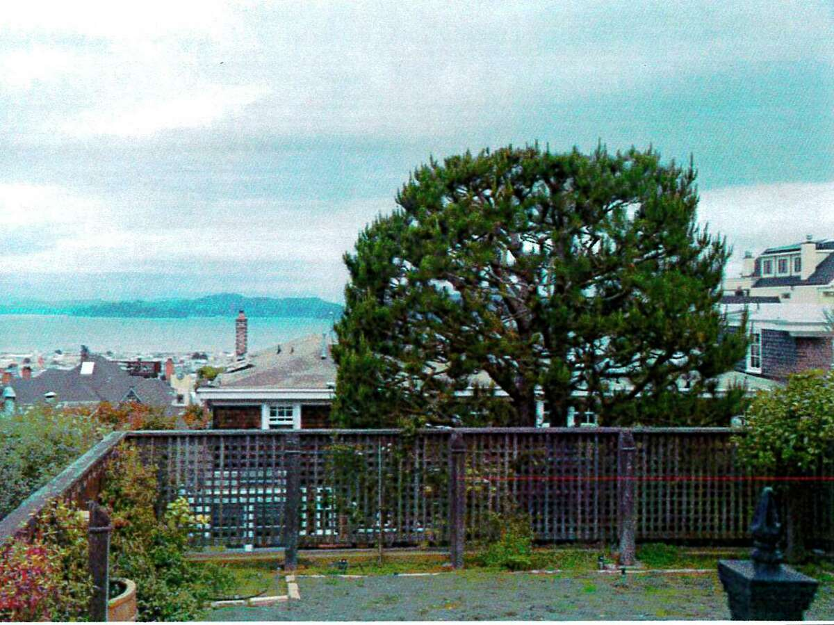 The view-blocking tree as seen in a photograph from 2019 in San Francisco's Pacific Heights neighborhood.