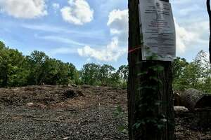 Three trees on a town right-of-way slated for destruction were the subject of a hearing before the Greenwich Tree Warden on Thursday.