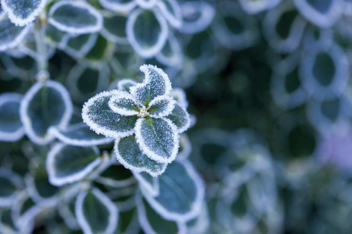The next Master Gardener Association of Northwest Michigan will feature information on preparing a garden for winter. (Courtesy Photo/Getty Images)