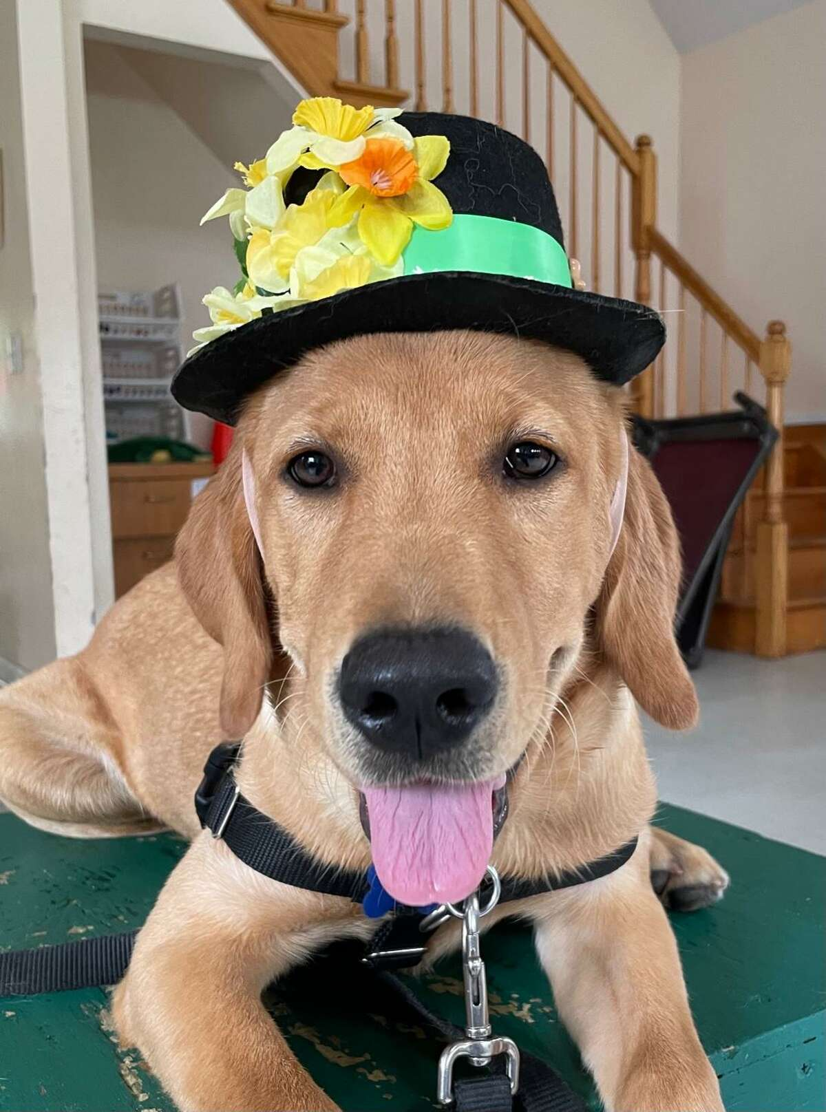 ECAD is holding an open house Oct. 3, where service dogs like Happy will waiting to greet visitors.