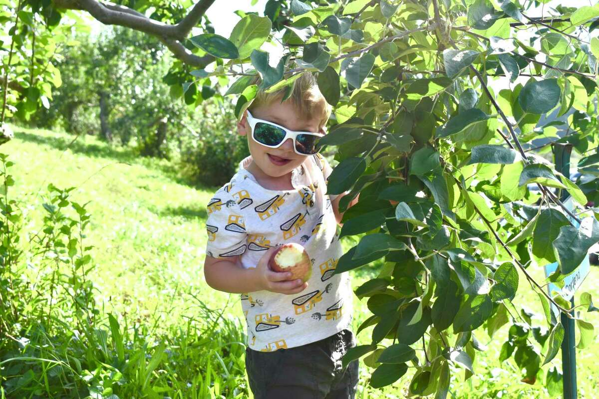 Children and their families went apple-picking Sept. 18 at March Farm in Bethlehem.