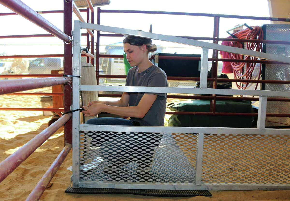 Clear Brook High School student Naomi Browning, 17, sets up a pen for her cattle at the Pasadena Livestock Show and Rodeo. Last year, she had a steer that earned reserve champion status.