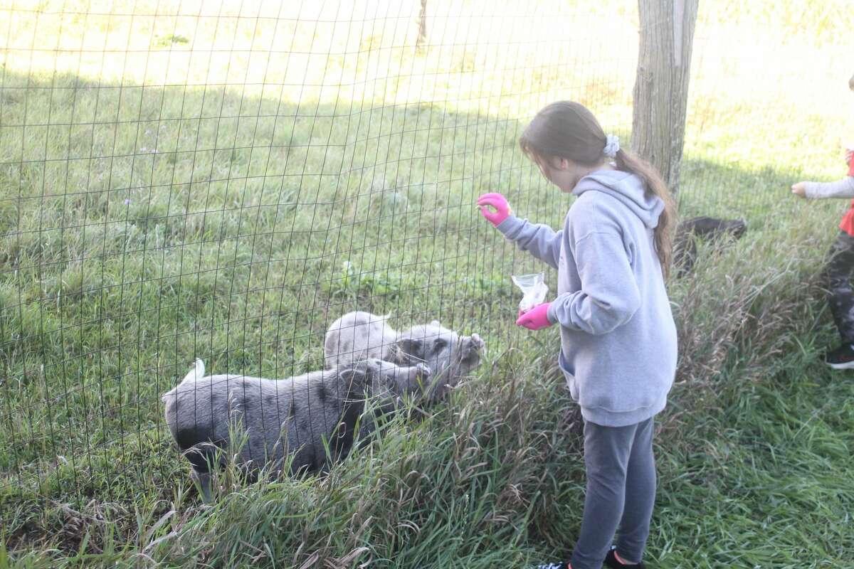 Trinity Lutheran School students enjoy a trip to Amnesty Freedom Farm in Brethren.