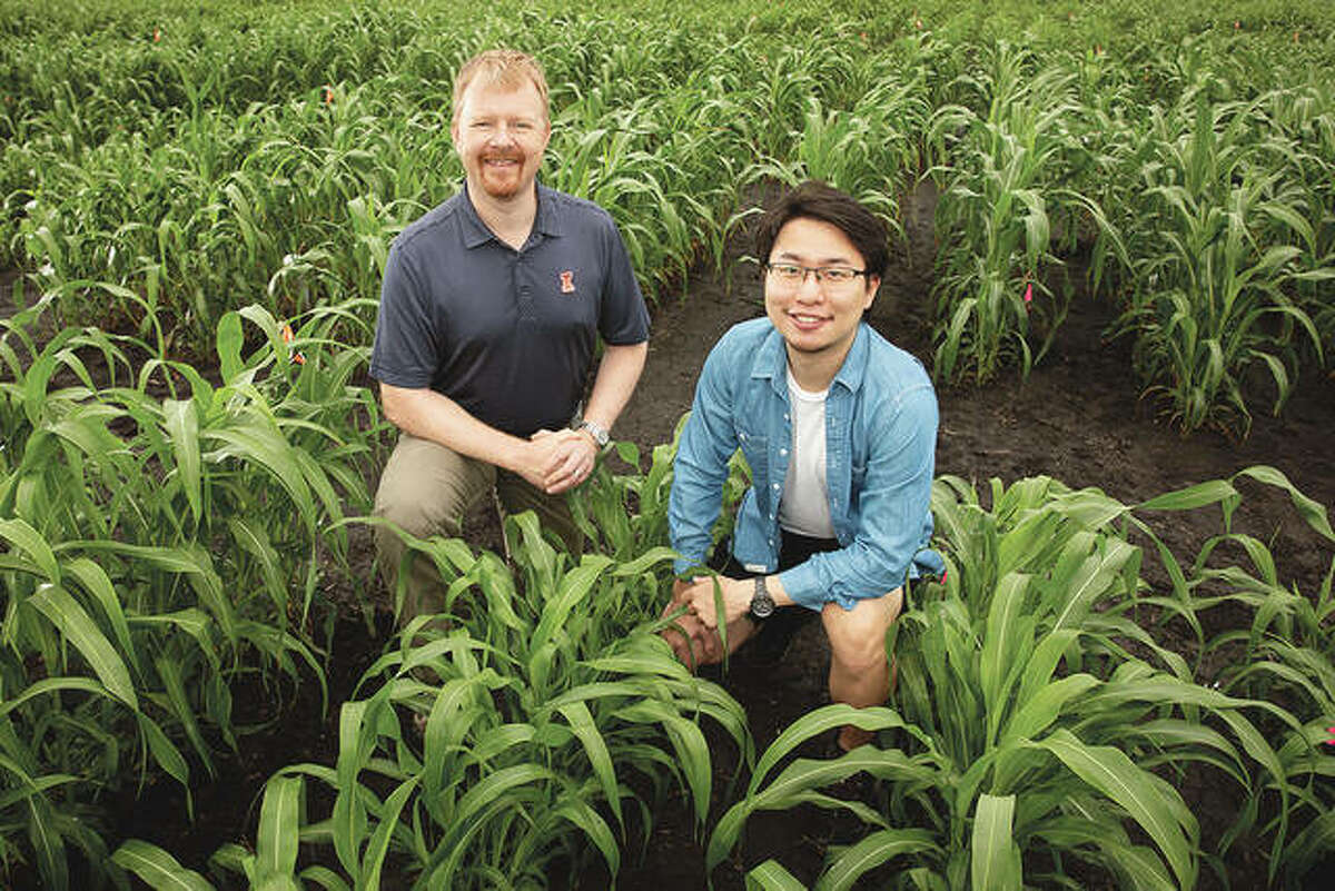 Andrew Leakey (left), Jiayang (Kevin) Xie and their colleagues developed an improved method for analyzing features of plant leaves that contribute to water-use efficiency in crops like corn, sorghum and Setaria. They used advanced statistical approaches to identify regions of the genome and lists of genes that contribute to these traits.
