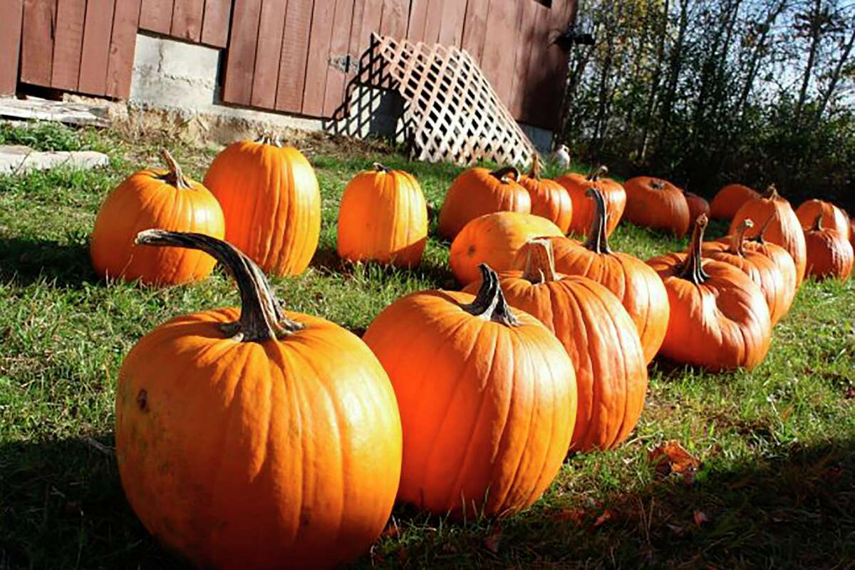 Looking for pumpkins? Many farms in Mecosta County sell pumpkins, as well as other fall produce. (Pioneer file photo)