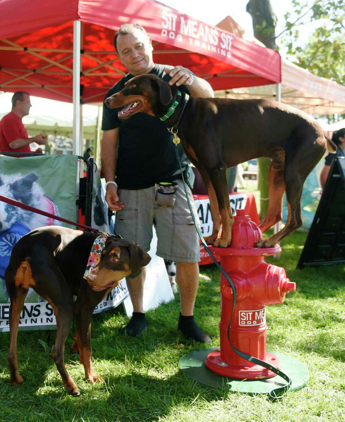 Michael Otsuka, of Mount Vernon, N.Y., pets his Doberman Pinscher Griffon, standing on a fire hydrant, at Adopt-a-Dog's annual Puttin' on the Dog fundraiser and adoption event at Roger Sherman Baldwin Park in Greenwich, Conn. Sunday, Sept. 26, 2021. The event featured music, pet-related vendors, demonstrations, competitions, and more fun activities for dogs and pet lovers.