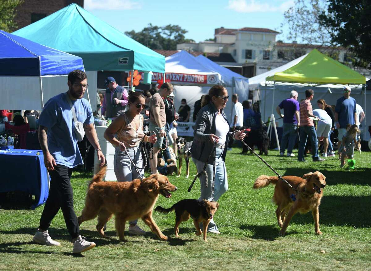 Photos from Adopt-a-Dog's annual Puttin' on the Dog fundraiser and adoption event at Roger Sherman Baldwin Park in Greenwich, Conn. Sunday, Sept. 26, 2021. The event featured music, pet-related vendors, demonstrations, competitions, and more fun activities for dogs and pet lovers.