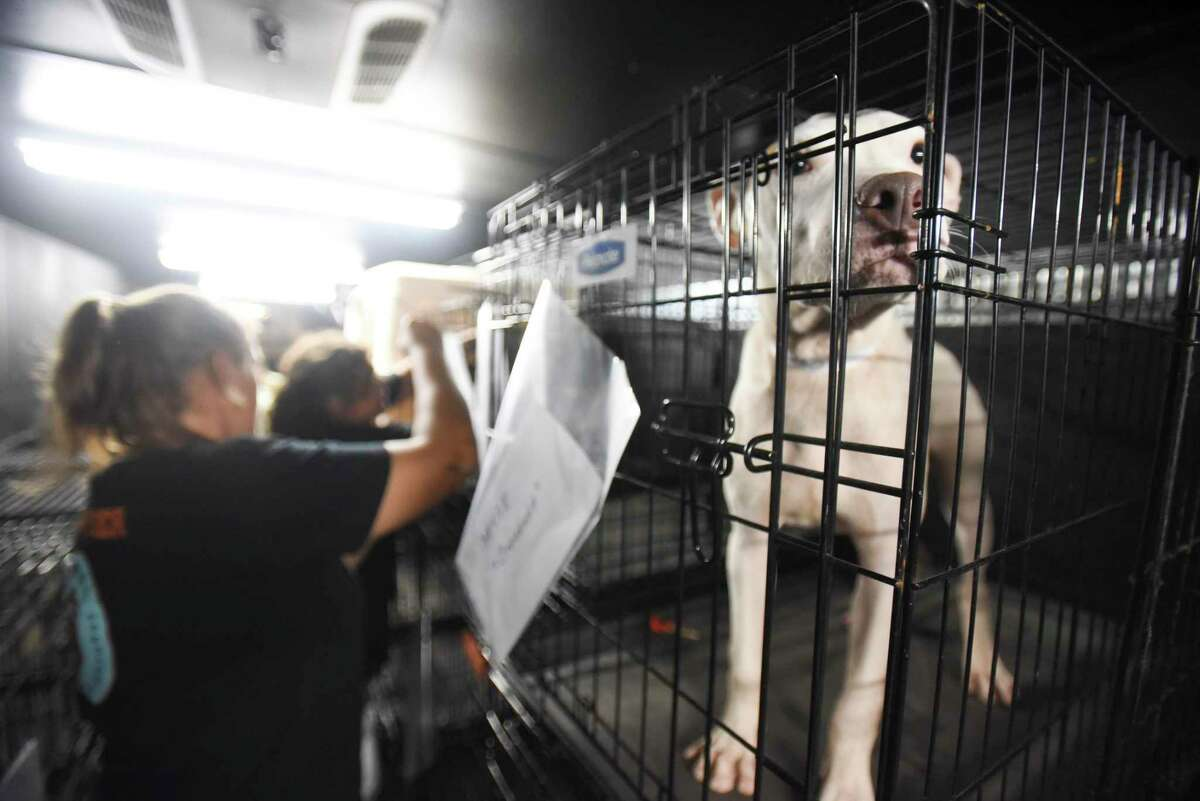 Dogs and cats at the Beaumont Animal Shelter Sunday night are moved to a trailer operated by Animal Investigation and Response and who will be taking the animals to Tulsa, Okla. Photo taken on Sunday, 09/22/19. Ryan Welch/The Enterprise