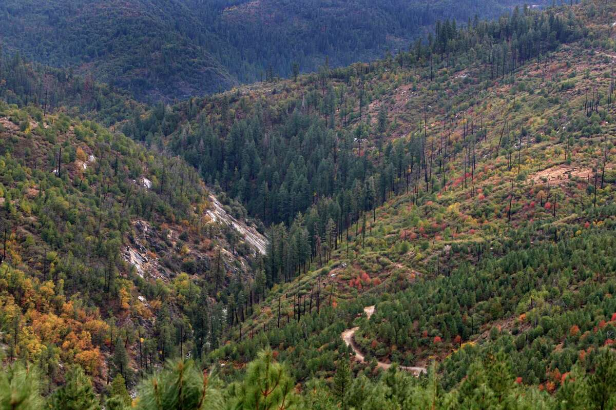 Sierra Pacific Industries in California plans to sell off carbon offsets generated by its forests.