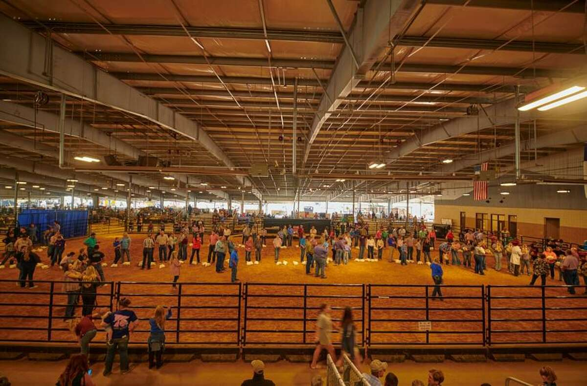 Students line up to have their chickens judged at the Fort Bend County Livestock Show on Saturday, Sept. 25, 2021.